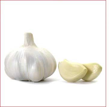 Полезные целебные свойства чеснока