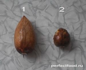 Две разные косточки авокадо