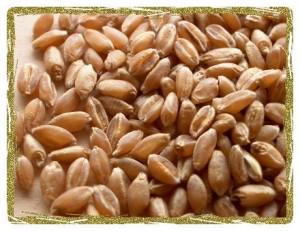 Как варить пшеницу - рекомендации по приготовлению