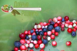 Сбор клюквы и лесных ягод
